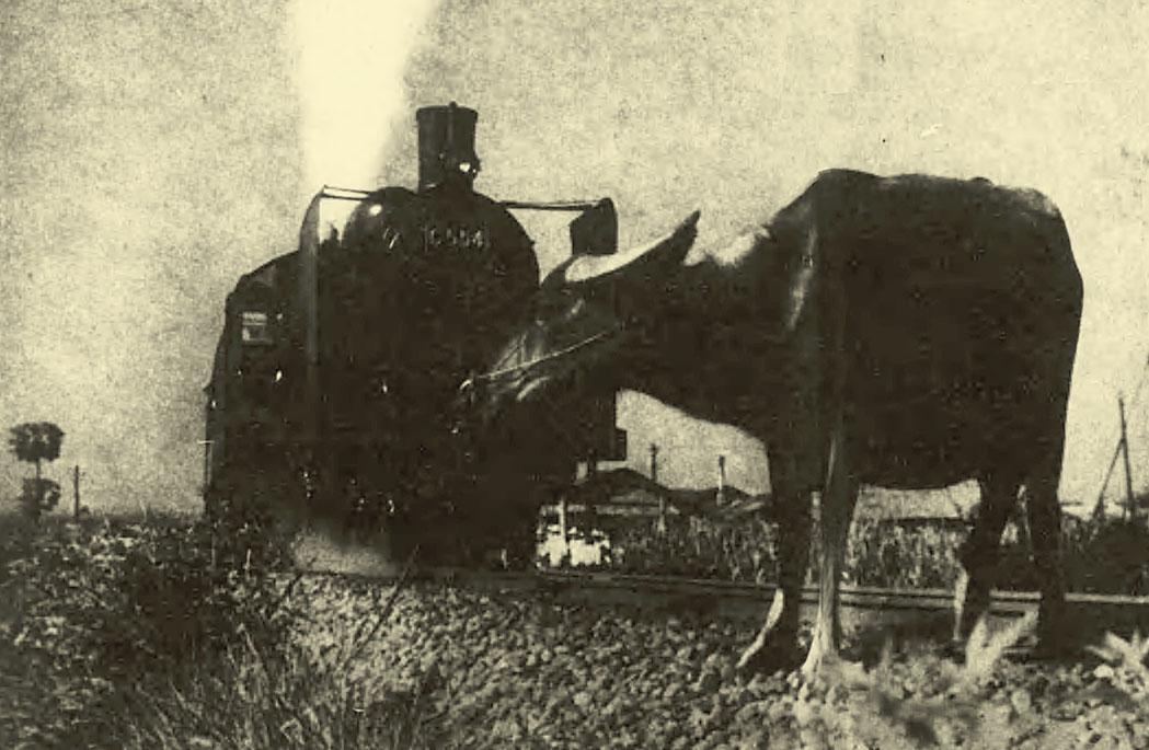 1930年代台灣火車與牛